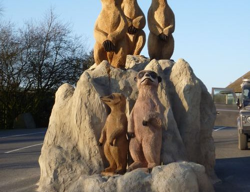 Knowsley Meerkats