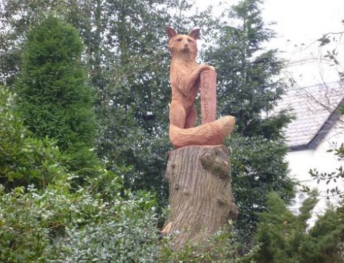 Large Fox on a tall stump