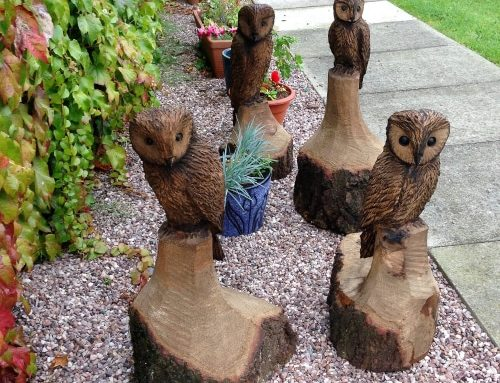 Four small Tawny Owls