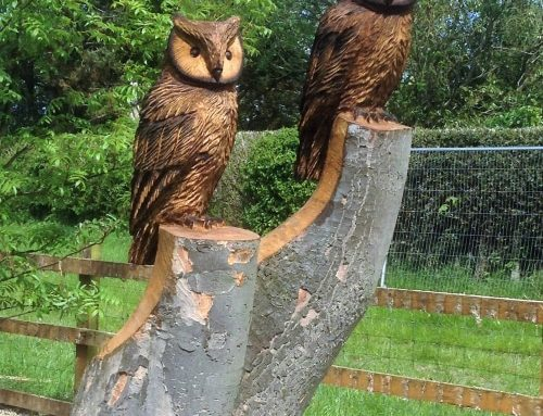 Mr and Mrs Wise Owl