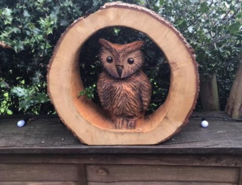 Wise Owl in a slice of Cedar