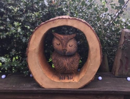 Sleepy Wise Owl in a log